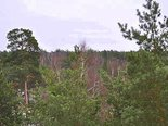 Mežaparka vārti 15