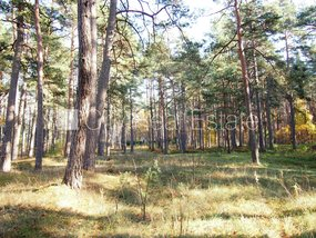 Land for sale in Jurmala, Melluzi